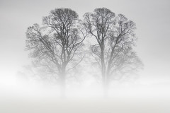 Twins in the Mist (wentloog) Tags: uk morning sky cloud mist tree green field fog wales river landscape dawn britain outdoor farm cymru cardiff foggy newport caerdydd glamorgan monmouth agriculture usk gwent wentloog stevegarrington
