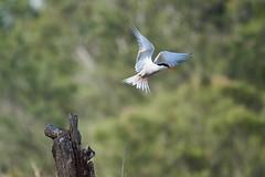 _DSC8685 (Carmen Coronado) Tags: naturaleza valencia fauna pjaros albufera sigma150500f563apodgos nikond750