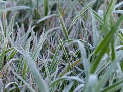 Geada / Frost (IgorCamacho) Tags: autumn winter cold fall ice gelo nature paran brasil frost natureza frosty southern inverno frio outono geada gelada outoo