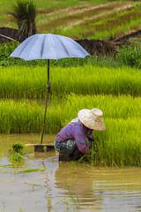ChiangRai_7369 (JCS75) Tags: canon thailand asia asie chiangrai thailande