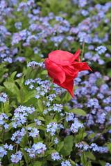 IMG_4449 (Irina Souiki) Tags: parcdesceaux france paris sceaux flowers nature parc park