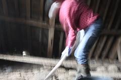IMG_3096 (De Tuinen van Servaas en Dorothe) Tags: duiven mest dakgoot stof gebinte
