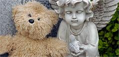 Mt. Calvary Cemetery, Valhalla, NY... Iscorama anamorphic (Small Creatures) Tags: cemetery angel teddybear valhalla anamorphic cinemascope isco d40 nikond40 iscorama nikkorh85mm anamorphiccloseup iscoramacloseup