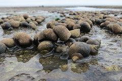 Sandsend Beach (Jon Pinder) Tags: beach canon powershot whitby sandsend s100 230616