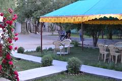 shocha guest house - hundur (sootix) Tags: sand camelride bactriancamel