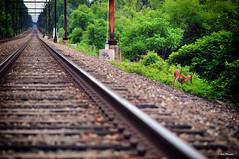 Walking away from the troubles (Igor Danilov) Tags: life railroad usa walking pennsylvania path secret tracks away share