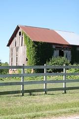 Old Barn (kellycrowe46) Tags: summer barn fence warm ivy sunny farmer oldbarn