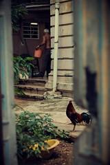 Patio cubano (Un par de peras) Tags: cuba lahabana lahavana elvedadodelahabana vedado colonial patio colores colorful colourful coloursoftheourworld airelibre cuban cubano