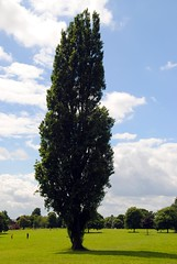 The tallest tree (zawtowers) Tags: park blue 2 sky tree green london sunshine walking warm skies open walk space exploring south capital sunday relaxing july sunny calm ring serene stroll section 3rd tallest amble eltham 2016 falconwoodtogrovepark