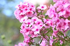 summer (dr.larsbergmann) Tags: flowers summer flower nature beautiful canon eos 100mm