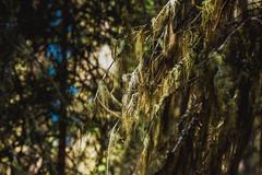 MH5_9231 (memories by Mark) Tags: rockies alberta banff rockymountains banffnationalpark johnstoncanyon