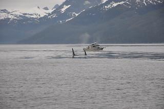 Alaska Fishing Tent Camp - Sitka 28