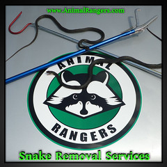 Florida snake removal services (Animal Rangers) Tags: florida snake removal services animalcontrol wildlifecontrol snakeremoval snakecontrol animalremoval animalrangers wildlifetrappers animaltrappers