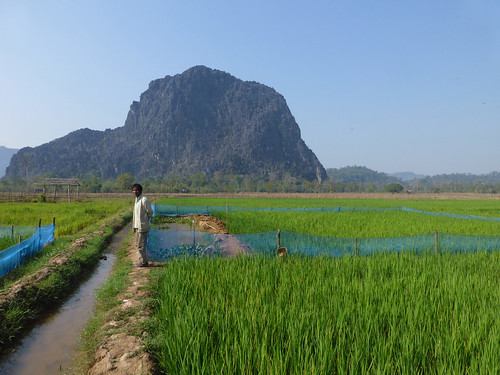 A farmer stands by his integrated rice and fish farm in Laos. Photo by Jharendu Pant, 2013.
