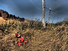 Red leaves - Valsaintes - Switzerland (Herv Platteaux) Tags: mountain landscape switzerland leaf 2012 gruyres
