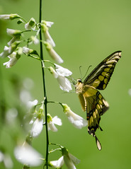 Summer Butterfly (A VT Photographer) Tags: nature nikon vermont adobe powell jonas f28 lightroom 80200 d7000