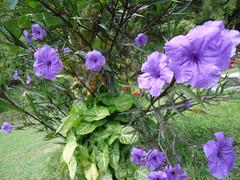 Las Flores I