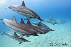 Naia (bodiver) Tags: hawaii dolphin ambientlight wideangle freediving fins naia hookena