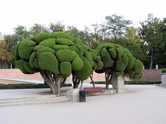 Giant Broccoli trees? (faster2007) Tags: broccolitrees sublimemasterpiece retiroparkmadrid
