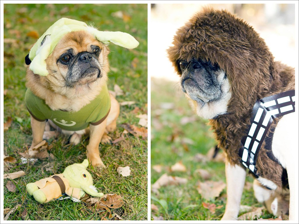 For Your Halloween Amusement ([Christine]) Tags costumes dog halloween starwars yoda & The Worldu0027s Best Photos of dog and wookie - Flickr Hive Mind
