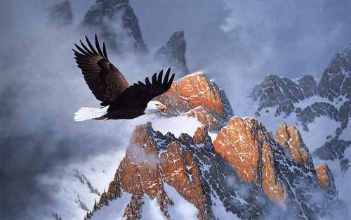 eaglesnow3