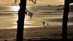 Evening at the beach in Tofino BC. (flowerikka) Tags: ocean sunset canada beach nature sand rocks waves vancouverisland pacificocean tofino tree´s