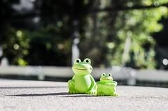 Hello! (BGDL) Tags: togetherness florida frogs poolside weeklytheme niftyfifty lakewoodranch nikond7000 bgdl lightroom5 nikkor50mm118g flickrlounge