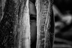 Hay miradas que hablan... (Ayelen Ferro) Tags: blanco ojo y negro que nia bosque mirar hay tronco ferro miradas ayelen hablan