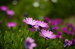 Magic garden (Capturedbyhunter) Tags: flores portugal 50mm pentax takumar 8 super elements jardim santarm fernando marques k5 114 ribatejo coruche caador fajarda pentaxart