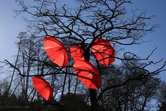 stuck in limbo (Eyesplash - let's feel the heat) Tags: blue red sky tree umbrella parasol spanishbanks suspended brolly stuckinlimbo