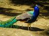 "Noisy bird <a style=""margin-left:10px; font-size:0.8em;"" href=""http://www.flickr.com/photos/41134504@N00/12924762083/"" target=""_blank"">@flickr</a>"