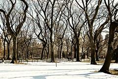 Central Park (Paul Anthony Moore) Tags: usa snow newyork centralpark manhattan