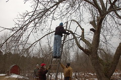 """Apple Pruning Party <a style=""""margin-left:10px; font-size:0.8em;"""" href=""""http://www.flickr.com/photos/91915217@N00/13528553794/"""" target=""""_blank"""">@flickr</a>"""