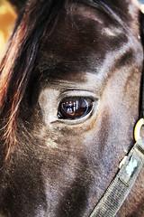 Eye Spy (gearidhayes) Tags: horse dog pets colour animals closeup sepia blackwhite sheep serious highcontrast vivid monotone swans creatures mammals avian