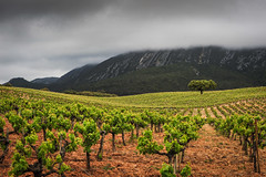 Arrbida Vineyards (Paulo N. Silva) Tags: