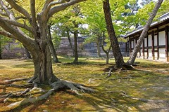 Trees at Nijo Castle (pim van den heuvel) Tags: mountain tree castle castles japan high bomen kyoto view tag den hills pim add nippon van overview kasteel nijo heuvel 二条城 京都市 jihon