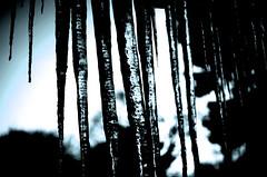 Winter V (Josh Rokman) Tags: winter snow macro ice nature weather boston outdoors frozen nikon snowy path snowstorm newengland freezing icicle snowing plow shovel snowfall blizzard shining sparkling icecrystals snowplow shoveling snowbank icycle bostonsnow snowshovel icecle snowmound bostonwinter newenglandwinter icemacro icecal d7000 bostonblizzard nikond7000 boston2015 icecel