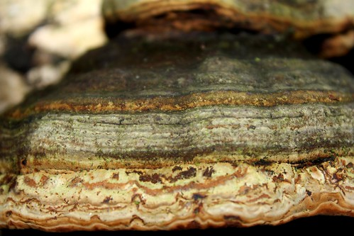 "Zunderschwamm (Fomes fomentarius) (8/8) • <a style=""font-size:0.8em;"" href=""http://www.flickr.com/photos/69570948@N04/16242051048/"" target=""_blank"">View on Flickr</a>"