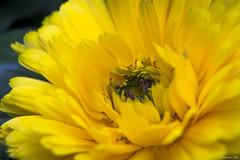 El Olivar   Lima (Jersson Tello C) Tags: parque flores macro verde canon arbol lima per miraflores tello jersson