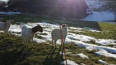 Endlich mal wieder im Sonnenschein laufen (saahiradancer) Tags: priska see schwarzwald februar schopfheim 2015 nieke wandertour saahira eichener