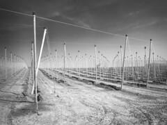 Poles and Cables (enneafive) Tags: fruit graphic belgium belgique belgie earth culture cables plantation poles borgloon antihail