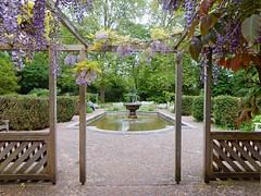 The Old English Garden, Battersea Park, London (Linda 2409) Tags: fountain pond wisteria pergola