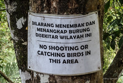 2015. Munduk. (Marisa y Angel) Tags: bali indonesia 2015 munduk