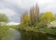 02-IMG_3173 (hemingwayfoto) Tags: wolken fluss baum wetter pappel leine trauerweide leinemasch