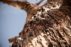 IMG_5169 (Lastexit) Tags: california desert joshuatree yuccavalley