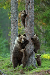The Happiest Family amongst the animals in Images (PhotographyPLUS) Tags: pictures graphics photos illustrations images stockphotos articles footage stockimage freephoto stockphotograph
