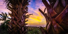 Sunrise between Two Palms (m16brooks) Tags: ocean blue orange sun beach nature beautiful yellow sunrise palms early florida sony palm palmtrees cocoabeach a6000