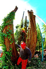 IMG_9821 (rogerbtree) Tags: seattle trees chainsaw logging cranes arborist treeremoval ropeaccess treeservice lakeforestparkwa