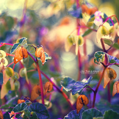 Seeds of Love (Joo Pedro de Almeida) Tags: world pink blue light summer plant abstract blur cold flower macro green nature colors beautiful beauty field forest spring focus warm soft day peace shadows seasons purple bokeh magic details memories dream sunny fairy fantasy micro lonely piece stillness 50mmf18 canon600d