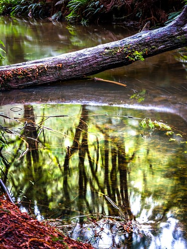 Redwood Forest-15